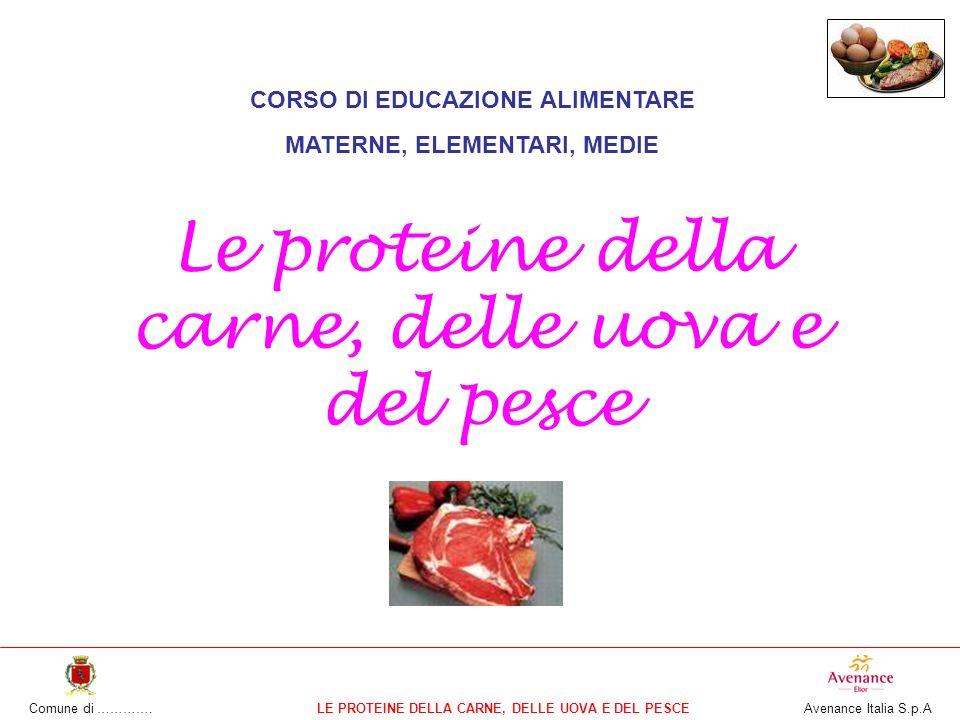 Comune di ………….LE PROTEINE DELLA CARNE, DELLE UOVA E DEL PESCE Avenance Italia S.p.A CORSO DI EDUCAZIONE ALIMENTARE MATERNE, ELEMENTARI, MEDIE Le proteine della carne, delle uova e del pesce