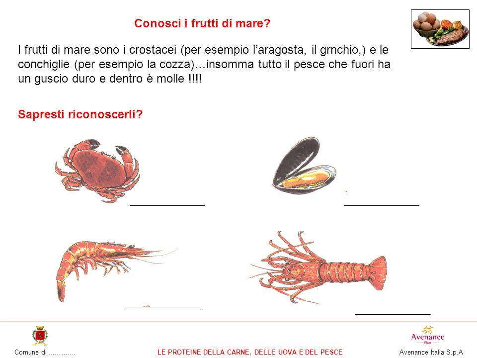 Comune di ………….LE PROTEINE DELLA CARNE, DELLE UOVA E DEL PESCE Avenance Italia S.p.A Conosci i frutti di mare.