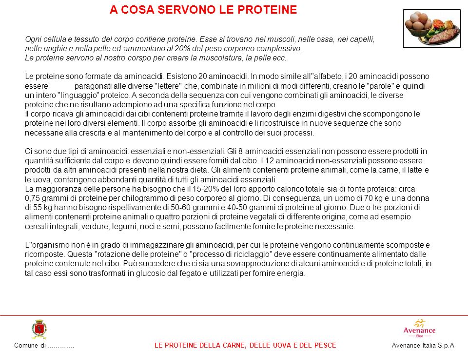 Comune di ………….LE PROTEINE DELLA CARNE, DELLE UOVA E DEL PESCE Avenance Italia S.p.A Ogni cellula e tessuto del corpo contiene proteine.