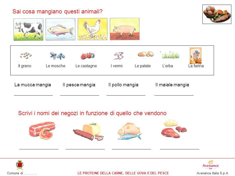 Comune di ………….LE PROTEINE DELLA CARNE, DELLE UOVA E DEL PESCE Avenance Italia S.p.A Sai cosa mangiano questi animali.