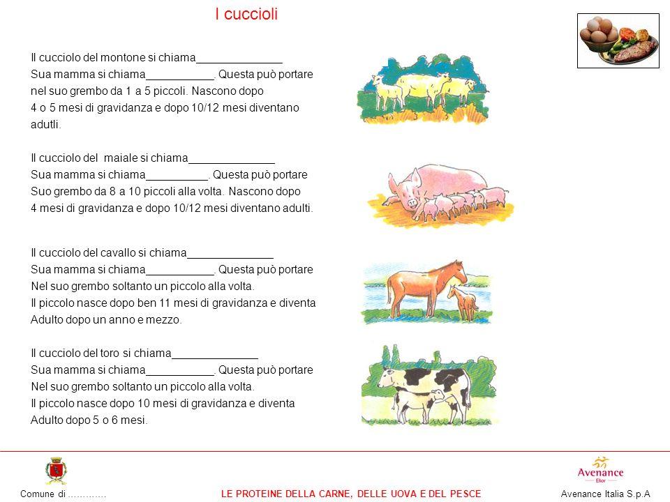 Comune di ………….LE PROTEINE DELLA CARNE, DELLE UOVA E DEL PESCE Avenance Italia S.p.A I cuccioli Il cucciolo del montone si chiama______________ Sua mamma si chiama___________.