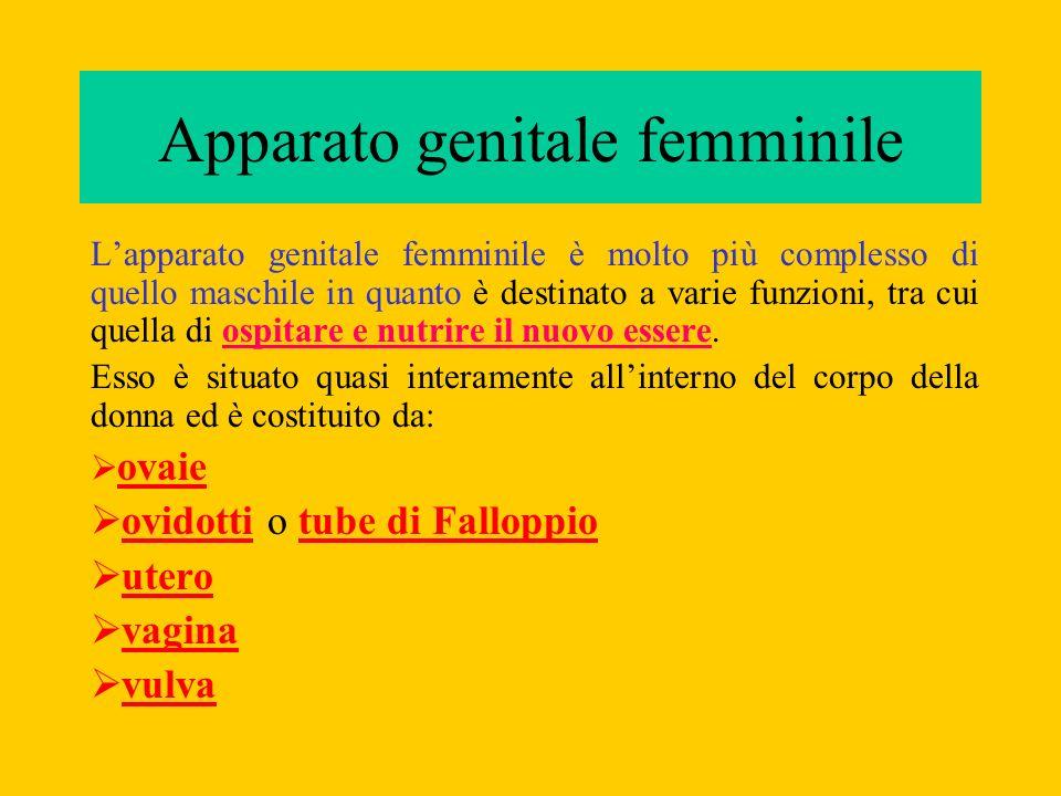 Lapparato genitale femminile è molto più complesso di quello maschile in quanto è destinato a varie funzioni, tra cui quella di ospitare e nutrire il