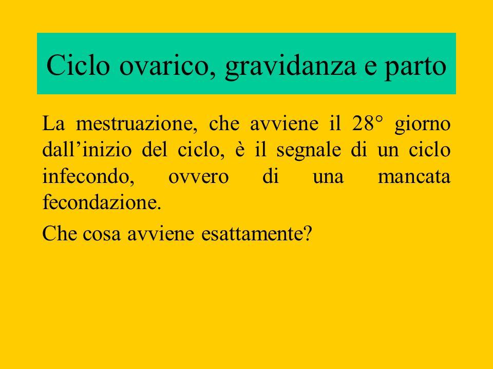 La mestruazione, che avviene il 28° giorno dallinizio del ciclo, è il segnale di un ciclo infecondo, ovvero di una mancata fecondazione. Che cosa avvi