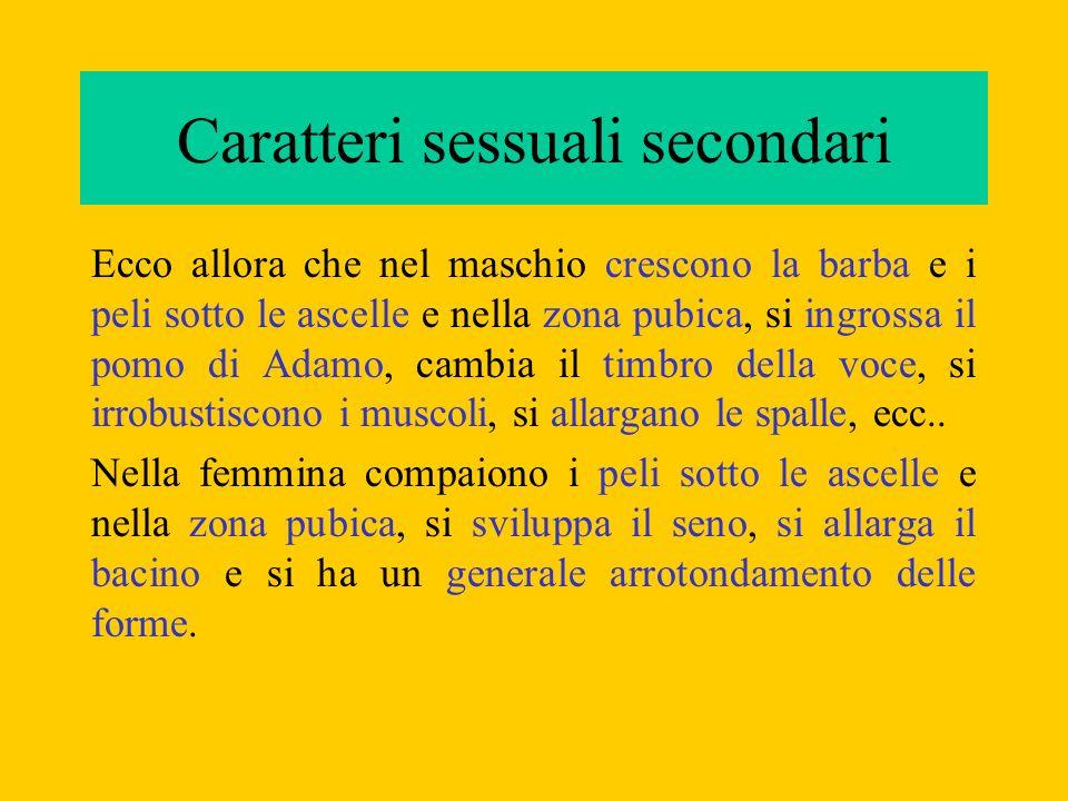 Caratteri sessuali primari I caratteri sessuali secondari determinano gli attributi anatomici e fisiologici delluomo e della donna; gli organi genitali veri e propri, detti caratteri sessuali primari, formano invece lapparato riproduttore, o genitale, maschile e femminile.
