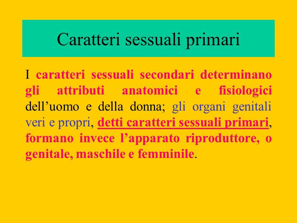Caratteri sessuali primari I caratteri sessuali secondari determinano gli attributi anatomici e fisiologici delluomo e della donna; gli organi genital