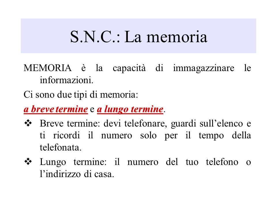 S.N.C.: La memoria MEMORIA è la capacità di immagazzinare le informazioni. Ci sono due tipi di memoria: a breve terminea lungo termine a breve termine
