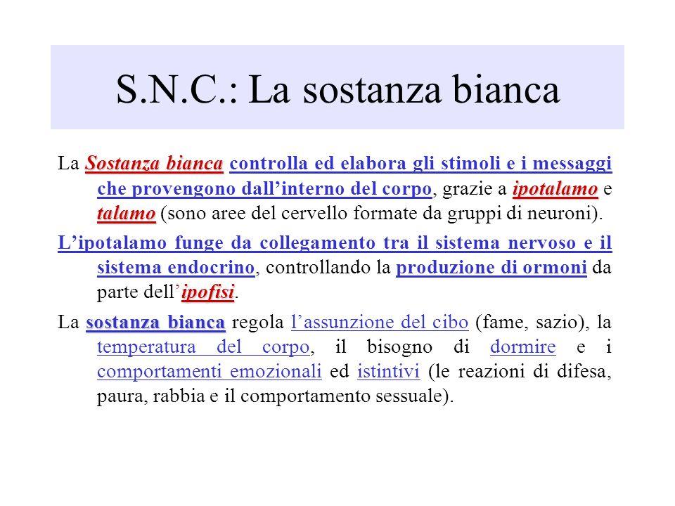 S.N.C.: La sostanza bianca Sostanza bianca ipotalamo talamo La Sostanza bianca controlla ed elabora gli stimoli e i messaggi che provengono dallintern