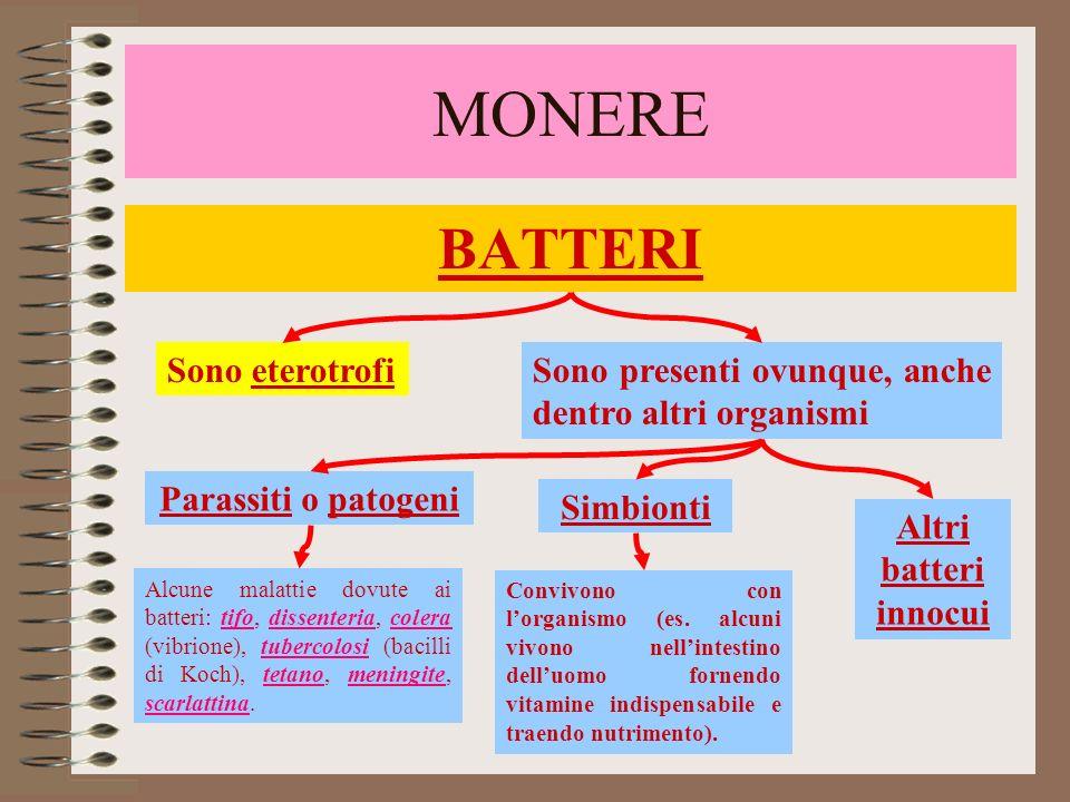 BATTERI MONERE Classificati in base alla forma, al modo di vita e al metabolismo FORMA MODO DI VITA Bacilli: forma di bastoncini; Vibrioni: forma curva; Spirilli: forma a spirale; Cocchi: forma sferica.