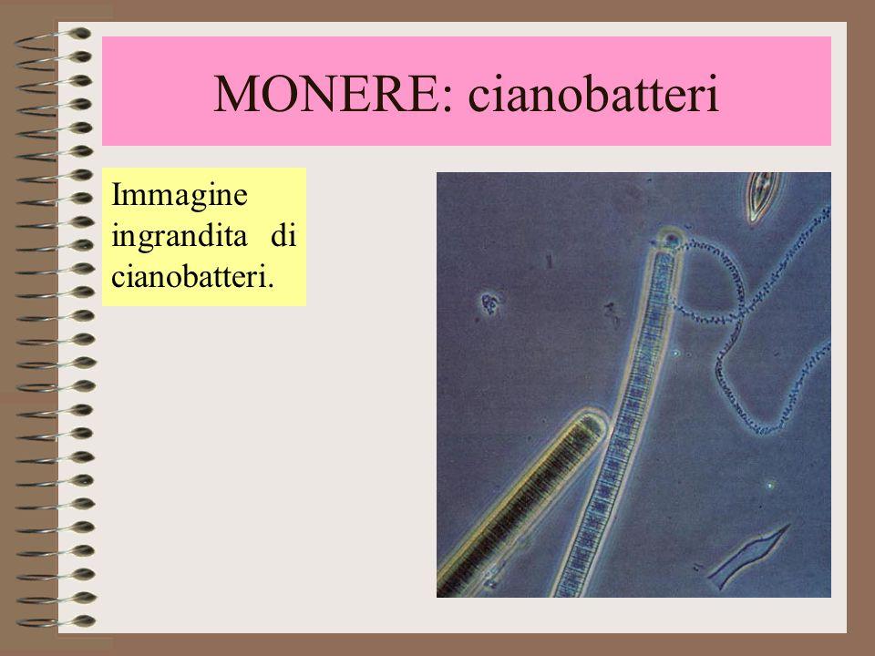 I Cianobatteri (dal greco kyanos = azzurro) sono organismi unicellulari autotrofi, cioè in grado di compiere la fotosintesi (grazie alla presenza di una sostanza simile alla clorofilla.