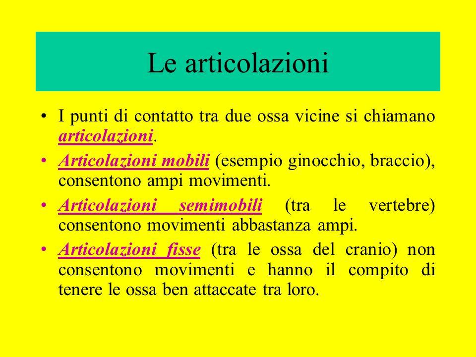 Le articolazioni I punti di contatto tra due ossa vicine si chiamano articolazioni. Articolazioni mobili (esempio ginocchio, braccio), consentono ampi