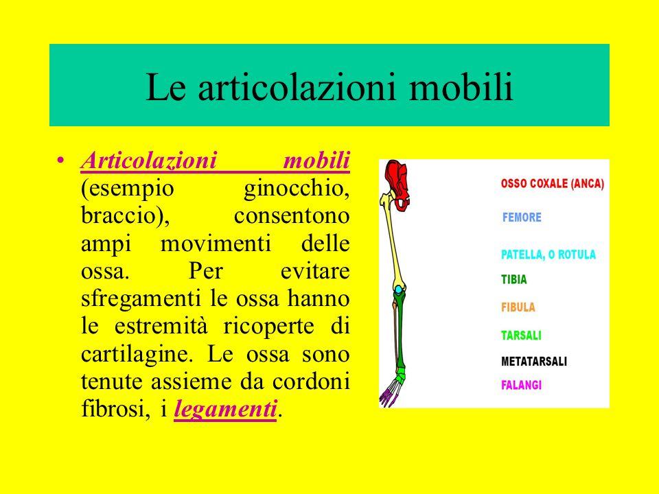 Le articolazioni mobili Articolazioni mobili (esempio ginocchio, braccio), consentono ampi movimenti delle ossa. Per evitare sfregamenti le ossa hanno