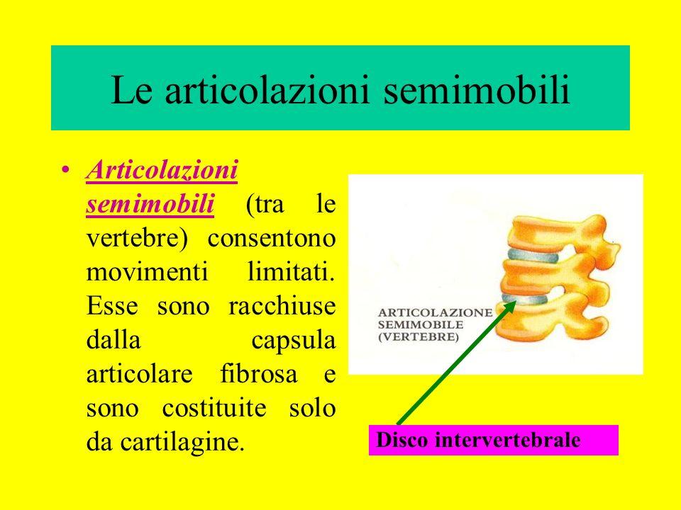 Le articolazioni semimobili Articolazioni semimobili (tra le vertebre) consentono movimenti limitati. Esse sono racchiuse dalla capsula articolare fib