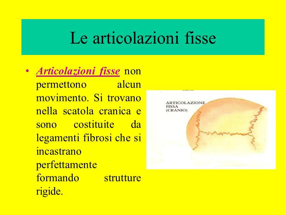 Le articolazioni fisse Articolazioni fisse non permettono alcun movimento. Si trovano nella scatola cranica e sono costituite da legamenti fibrosi che