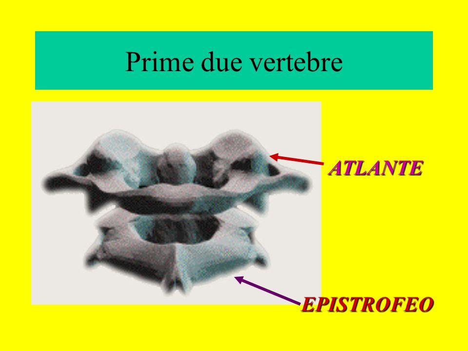 Prime due vertebre ATLANTE EPISTROFEO