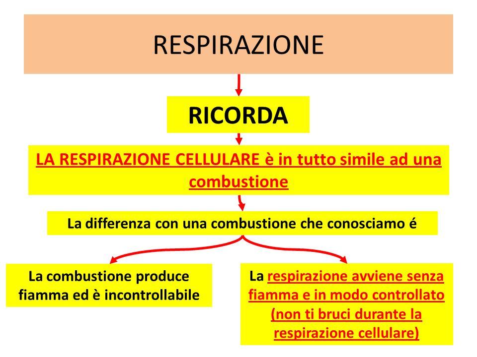 RESPIRAZIONE RICORDA LA RESPIRAZIONE CELLULARE è in tutto simile ad una combustione La differenza con una combustione che conosciamo é La combustione