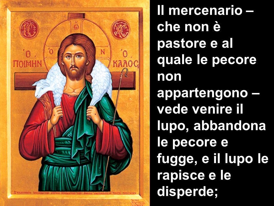 Il mercenario – che non è pastore e al quale le pecore non appartengono – vede venire il lupo, abbandona le pecore e fugge, e il lupo le rapisce e le