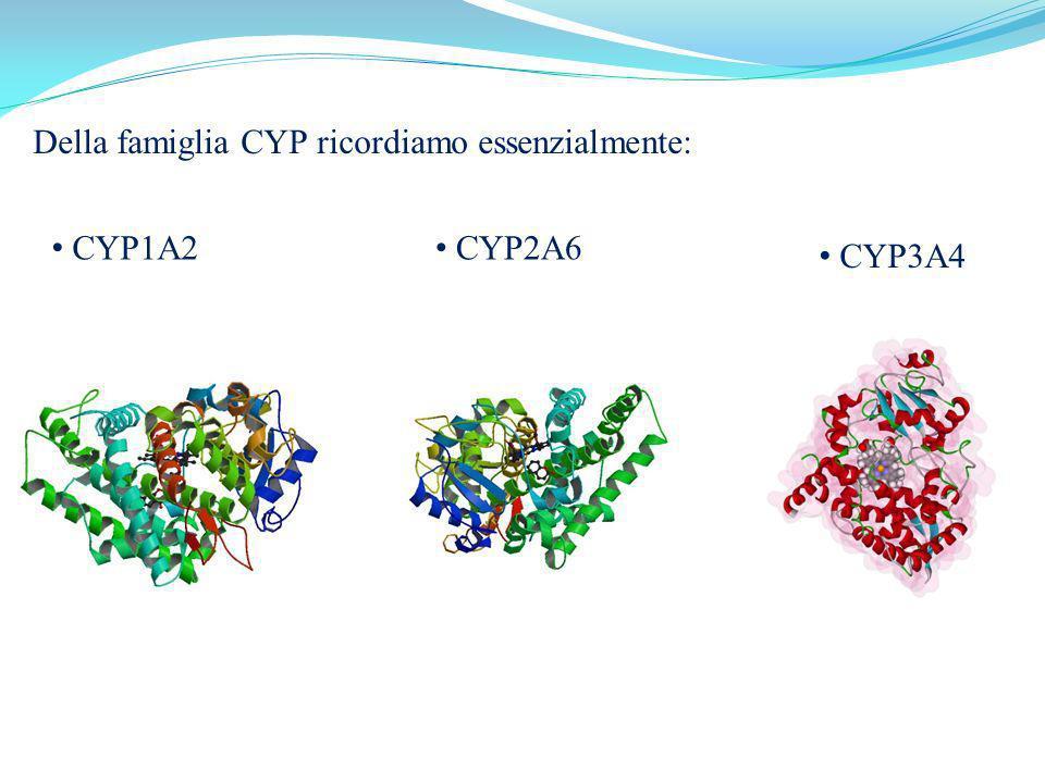 Della famiglia CYP ricordiamo essenzialmente: CYP1A2 CYP2A6 CYP3A4