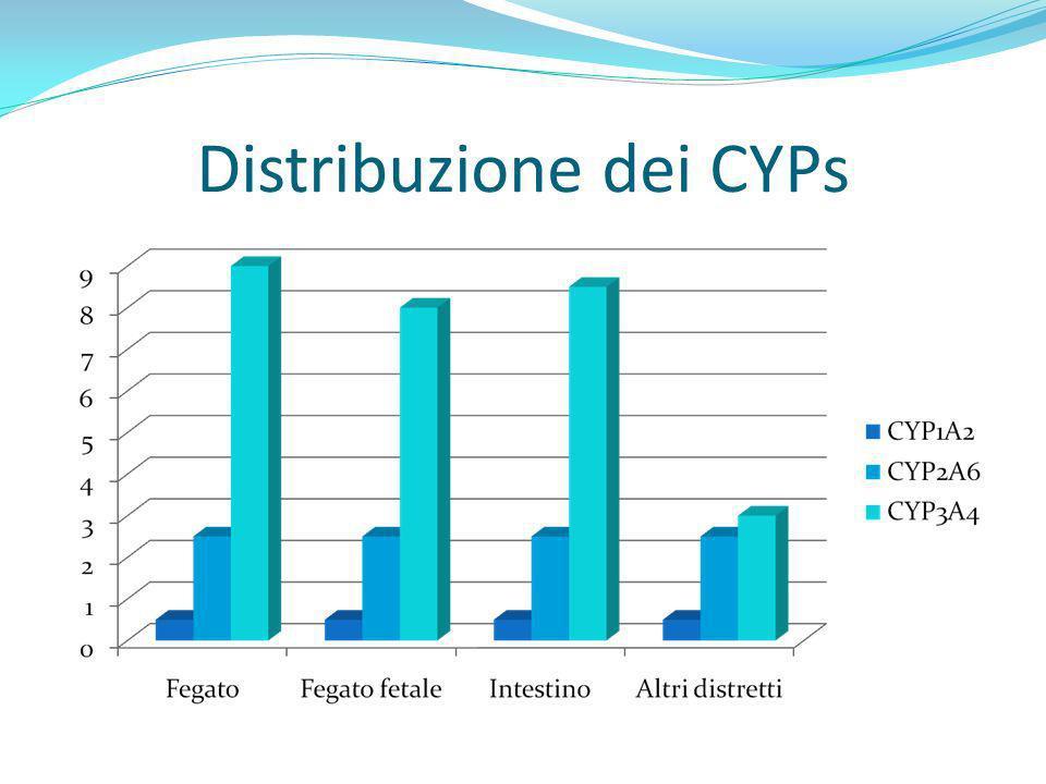 Distribuzione dei CYPs