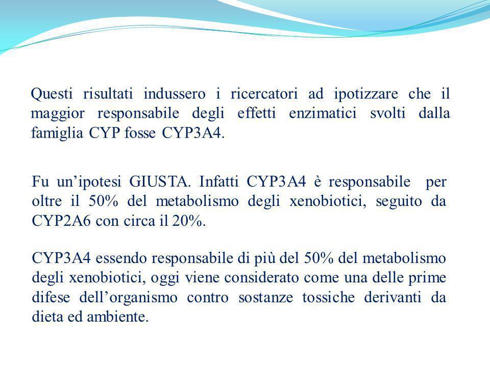 Questi risultati indussero i ricercatori ad ipotizzare che il maggior responsabile degli effetti enzimatici svolti dalla famiglia CYP fosse CYP3A4. Fu
