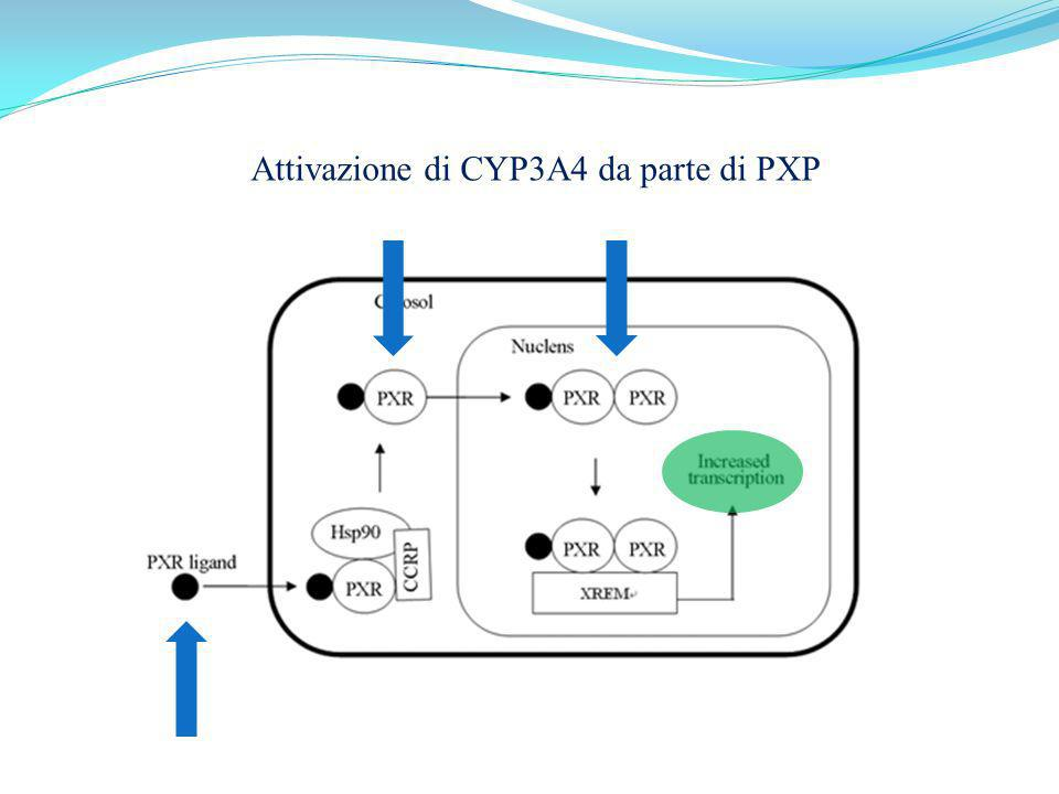 Attivazione di CYP3A4 da parte di PXP