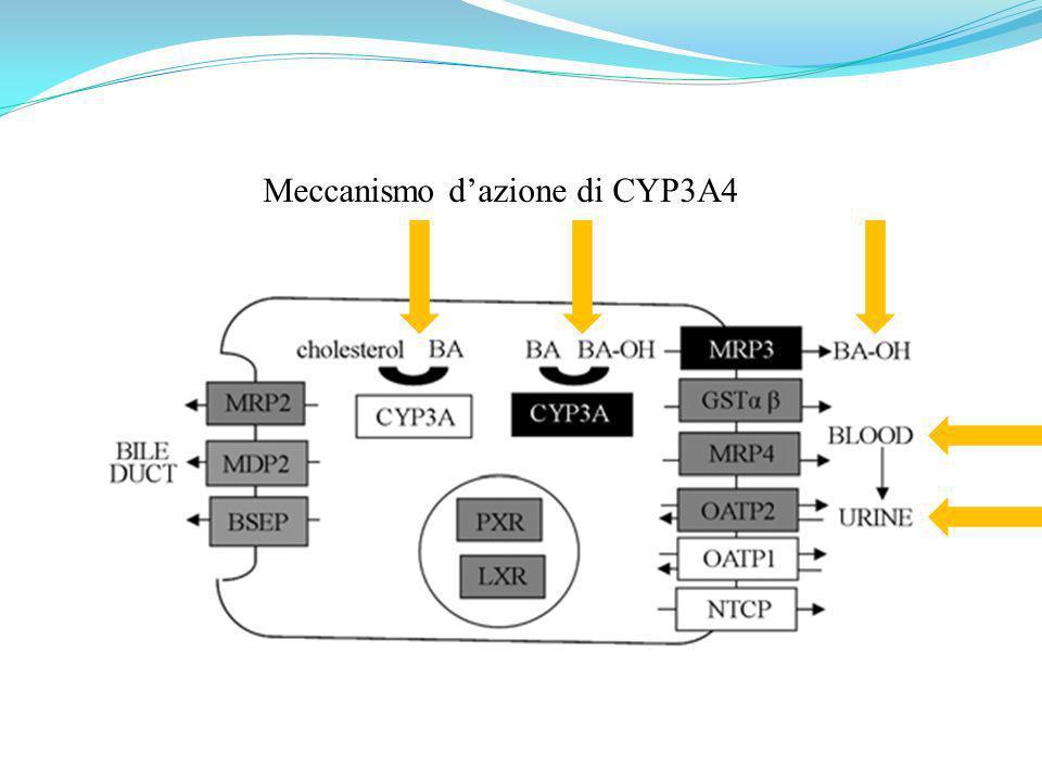Meccanismo dazione di CYP3A4