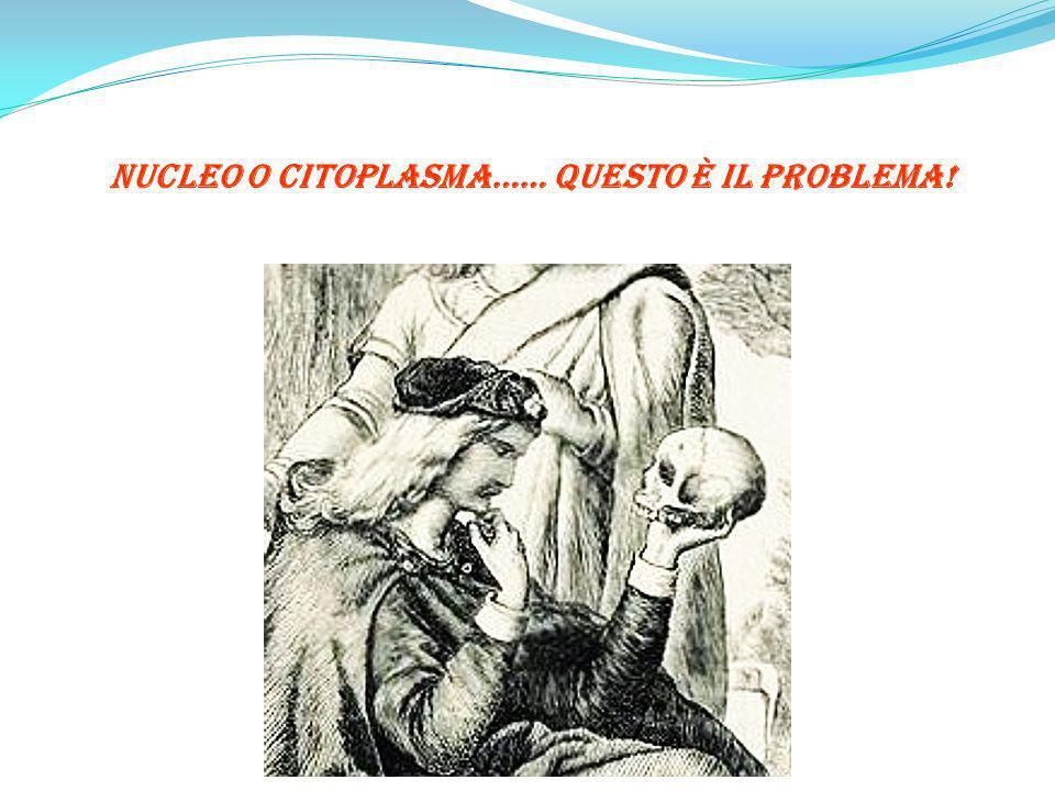 Nucleo o Citoplasma…… Questo è il Problema!
