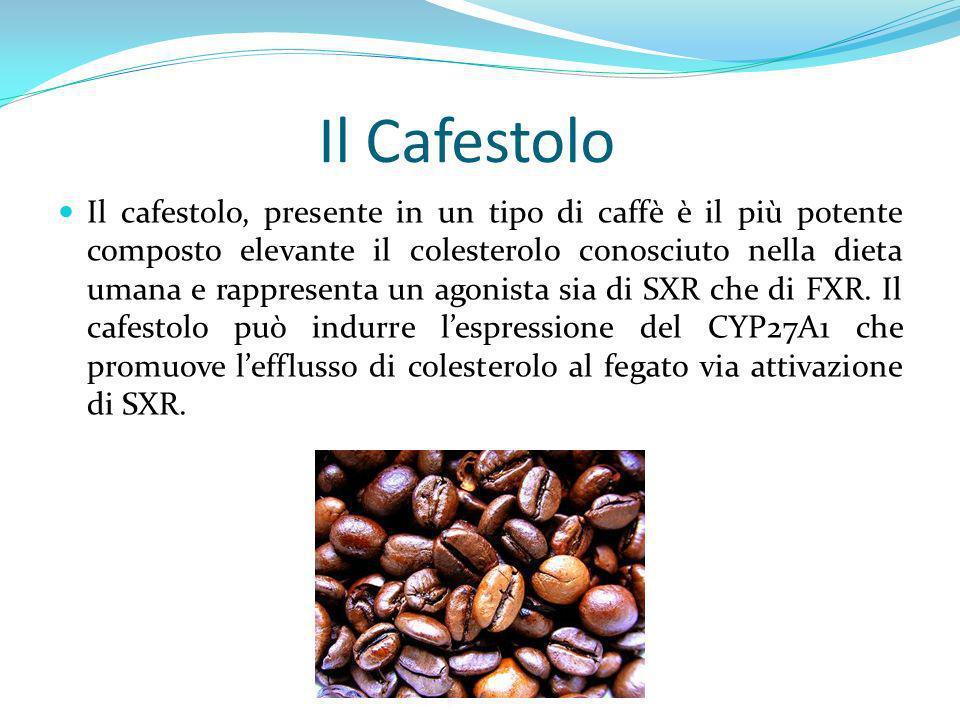 Il Cafestolo Il cafestolo, presente in un tipo di caffè è il più potente composto elevante il colesterolo conosciuto nella dieta umana e rappresenta u