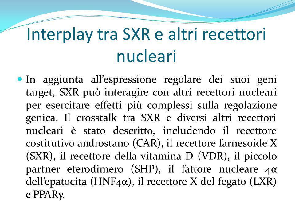 Interplay tra SXR e altri recettori nucleari In aggiunta allespressione regolare dei suoi geni target, SXR può interagire con altri recettori nucleari