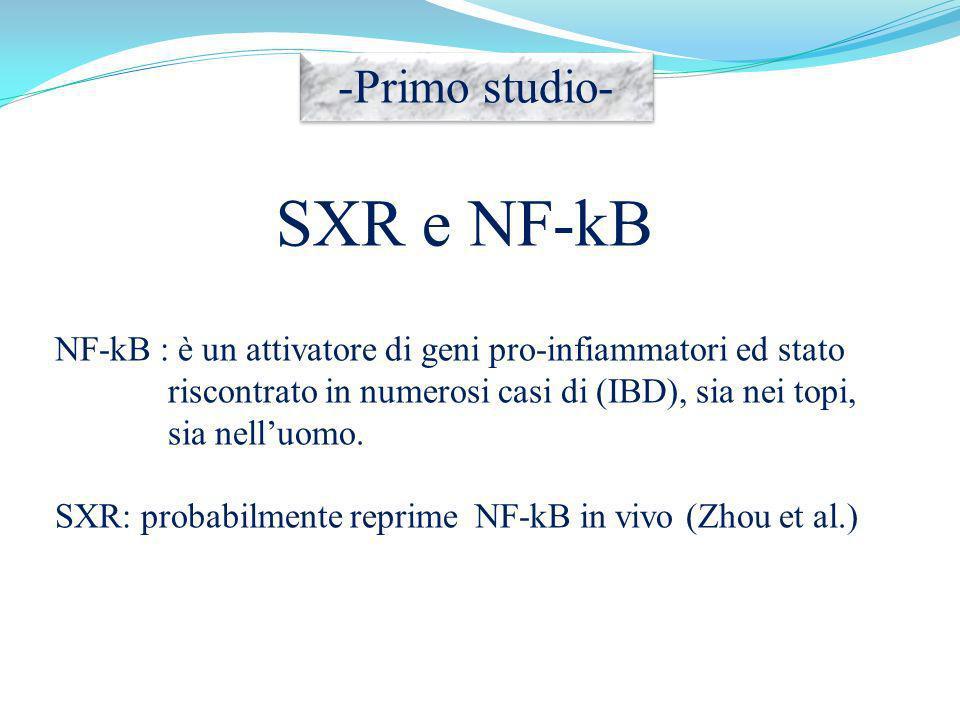 SXR e NF-kB NF-kB : è un attivatore di geni pro-infiammatori ed stato riscontrato in numerosi casi di (IBD), sia nei topi, sia nelluomo. SXR: probabil