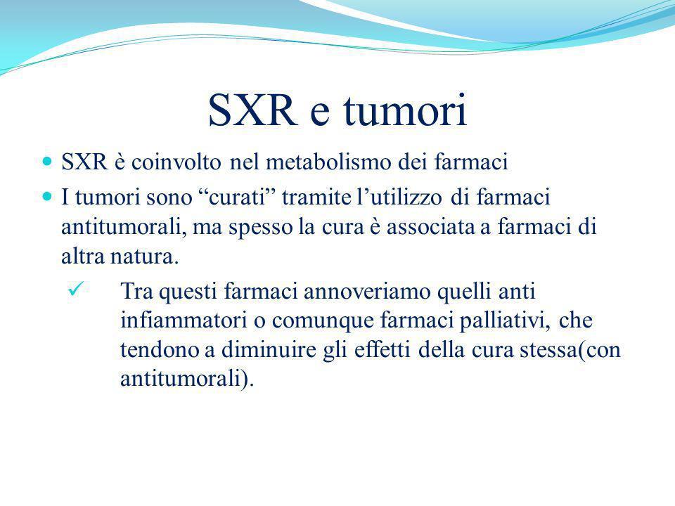 SXR e tumori SXR è coinvolto nel metabolismo dei farmaci I tumori sono curati tramite lutilizzo di farmaci antitumorali, ma spesso la cura è associata