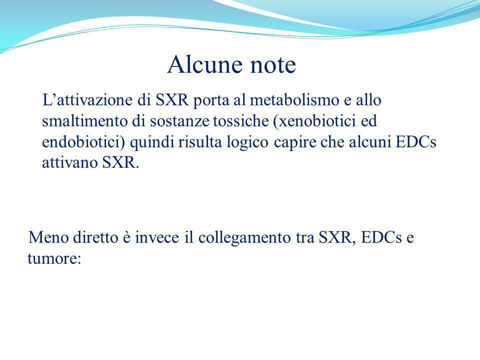 Alcune note Lattivazione di SXR porta al metabolismo e allo smaltimento di sostanze tossiche (xenobiotici ed endobiotici) quindi risulta logico capire