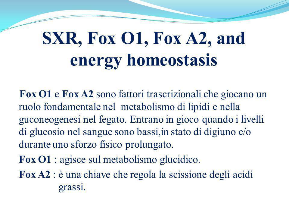 SXR, Fox O1, Fox A2, and energy homeostasis Fox O1 e Fox A2 sono fattori trascrizionali che giocano un ruolo fondamentale nel metabolismo di lipidi e