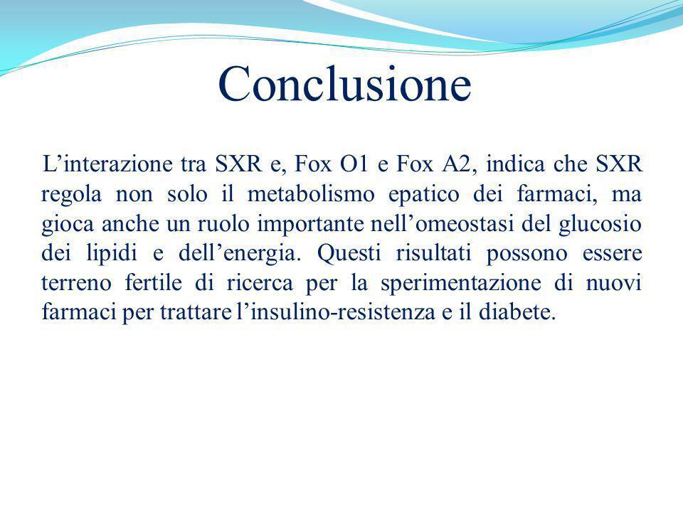 Conclusione Linterazione tra SXR e, Fox O1 e Fox A2, indica che SXR regola non solo il metabolismo epatico dei farmaci, ma gioca anche un ruolo import