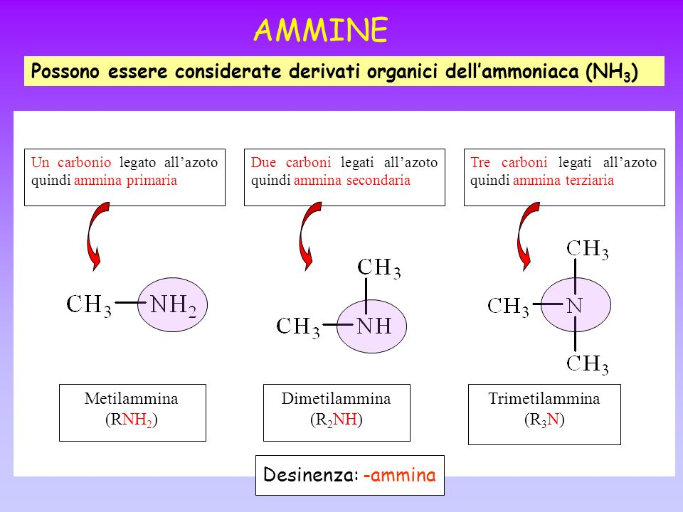 AMMINE Possono essere considerate derivati organici dellammoniaca (NH 3 ) Metilammina (RNH 2 ) Dimetilammina (R 2 NH) Trimetilammina (R 3 N) Un carbon