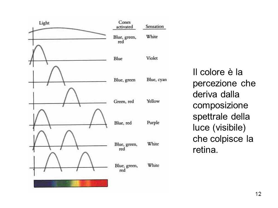 12 Il colore è la percezione che deriva dalla composizione spettrale della luce (visibile) che colpisce la retina.