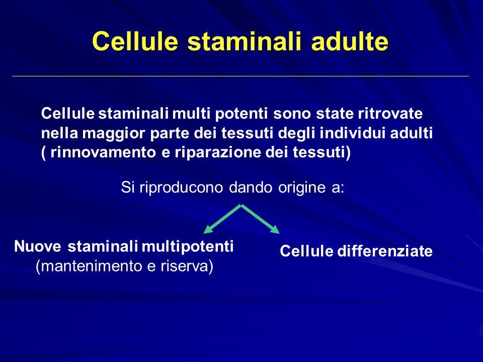 Cellule staminali multi potenti sono state ritrovate nella maggior parte dei tessuti degli individui adulti ( rinnovamento e riparazione dei tessuti)