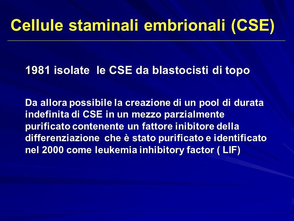 1981 isolate le CSE da blastocisti di topo Da allora possibile la creazione di un pool di durata indefinita di CSE in un mezzo parzialmente purificato