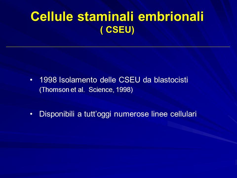 1998 Isolamento delle CSEU da blastocisti (Thomson et al. Science, 1998) Disponibili a tuttoggi numerose linee cellulari Cellule staminali embrionali
