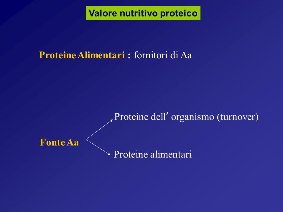 Valore nutritivo proteico Proteine Alimentari : fornitori di Aa Proteine dell organismo (turnover) Fonte Aa Proteine alimentari
