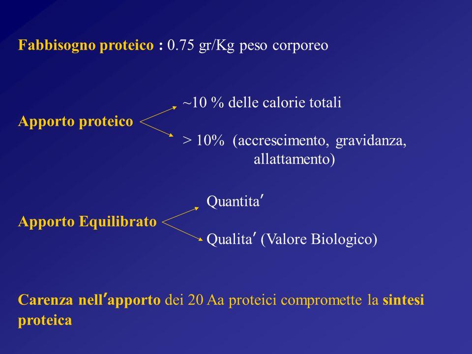 Fabbisogno proteico : 0.75 gr/Kg peso corporeo Carenza nellapporto dei 20 Aa proteici compromette la sintesi proteica ~10 % delle calorie totali Apporto proteico > 10% (accrescimento, gravidanza, allattamento) Quantita Apporto Equilibrato Qualita (Valore Biologico)