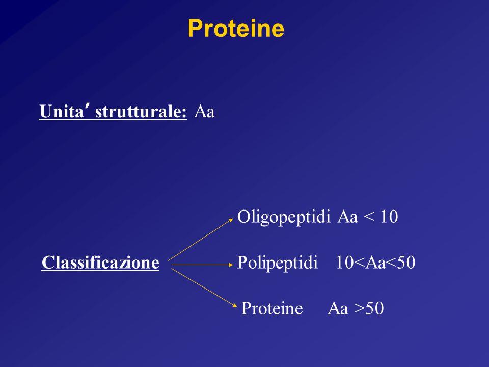 Unita strutturale: Aa Oligopeptidi Aa < 10 Classificazione Polipeptidi 10<Aa<50 Proteine Aa >50