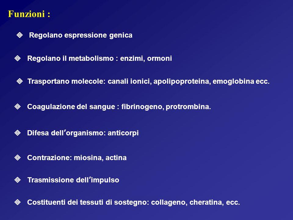 Funzioni : Costituenti dei tessuti di sostegno: collageno, cheratina, ecc.