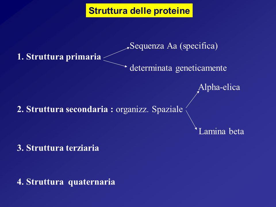4.Struttura quaternaria Struttura delle proteine 3.