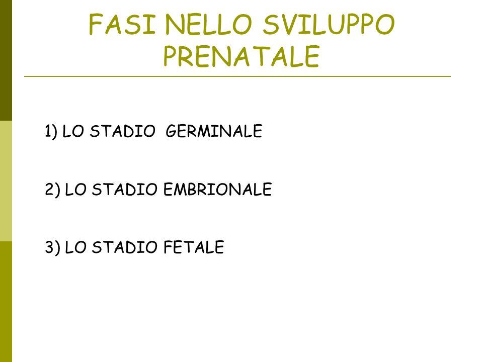 FASI NELLO SVILUPPO PRENATALE 1)LO STADIO GERMINALE 2) LO STADIO EMBRIONALE 3) LO STADIO FETALE