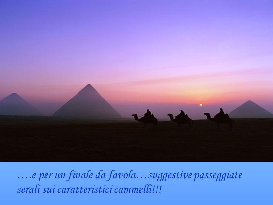 ….e per un finale da favola…suggestive passeggiate serali sui caratteristici cammelli!!!