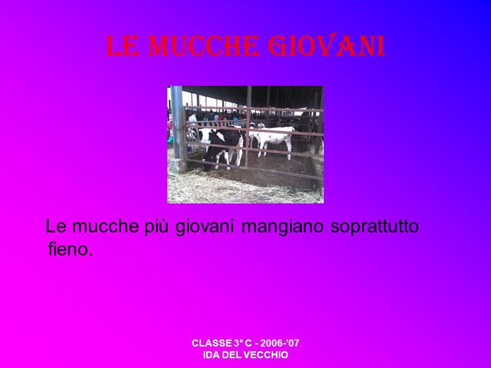 CLASSE 3° C - 2006-07 IDA DEL VECCHIO Le mucche giovani Le mucche più giovani mangiano soprattutto fieno.
