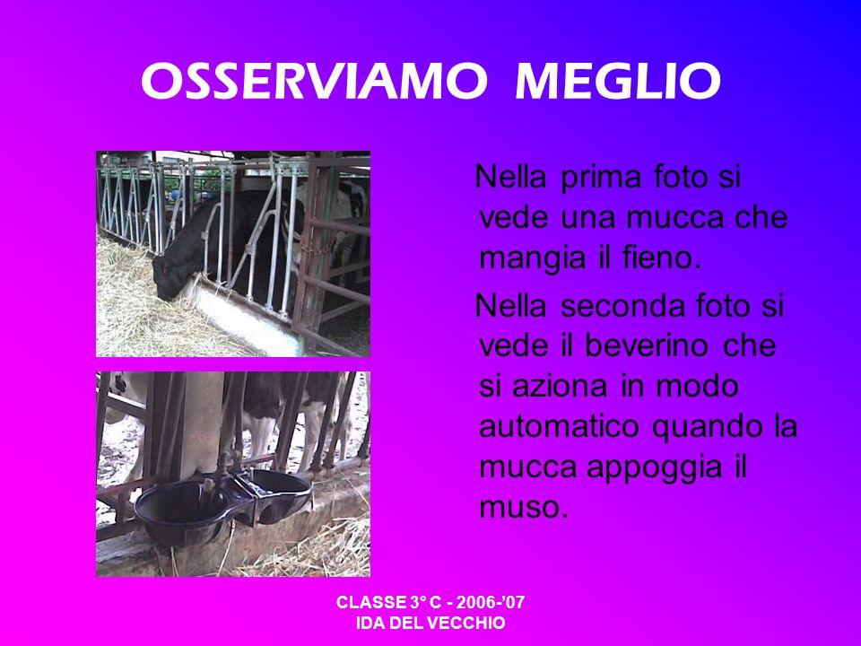 CLASSE 3° C - 2006-07 IDA DEL VECCHIO OSSERVIAMO MEGLIO Nella prima foto si vede una mucca che mangia il fieno. Nella seconda foto si vede il beverino