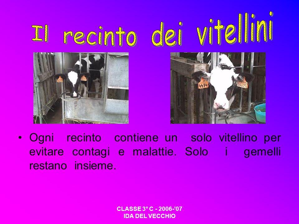 CLASSE 3° C - 2006-07 IDA DEL VECCHIO Ogni recinto contiene un solo vitellino per evitare contagi e malattie. Solo i gemelli restano insieme.