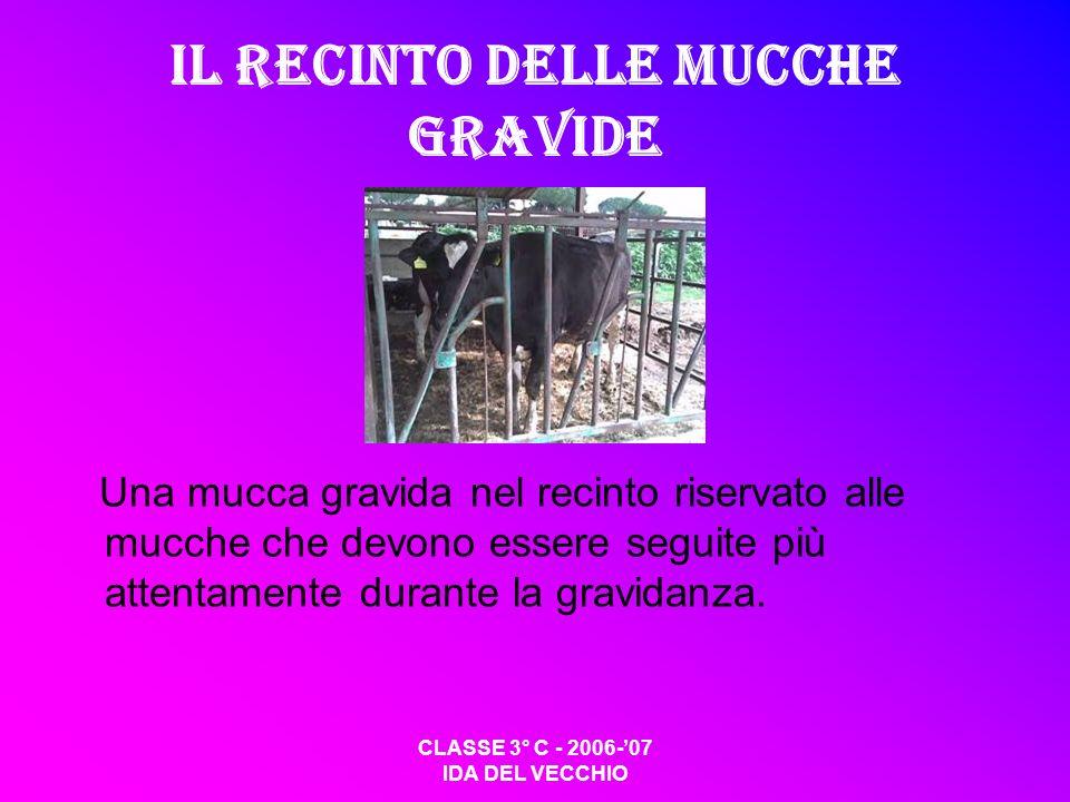 CLASSE 3° C - 2006-07 IDA DEL VECCHIO Il recinto delle mucche gravide Una mucca gravida nel recinto riservato alle mucche che devono essere seguite pi