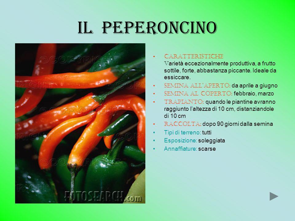 Il peperoncino Caratteristiche v arietà eccezionalmente produttiva, a frutto sottile, forte, abbastanza piccante. Ideale da essiccare. Semina allapert
